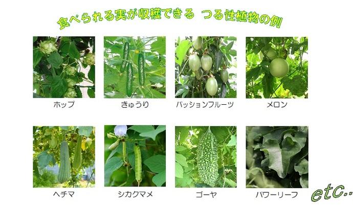 食べられる実が収穫できるつる性植物の例